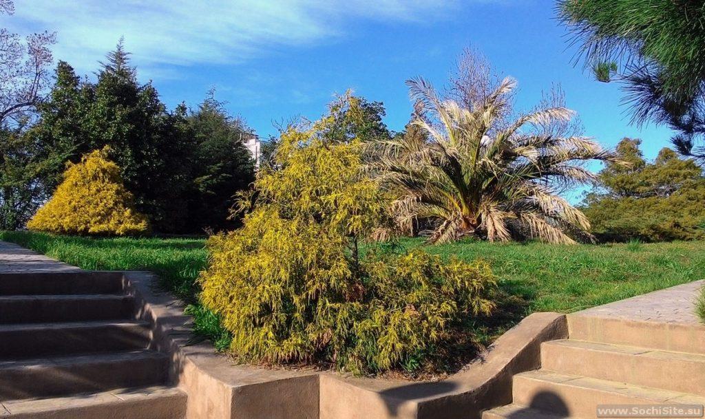 Парк Южные культуры Адлер фото