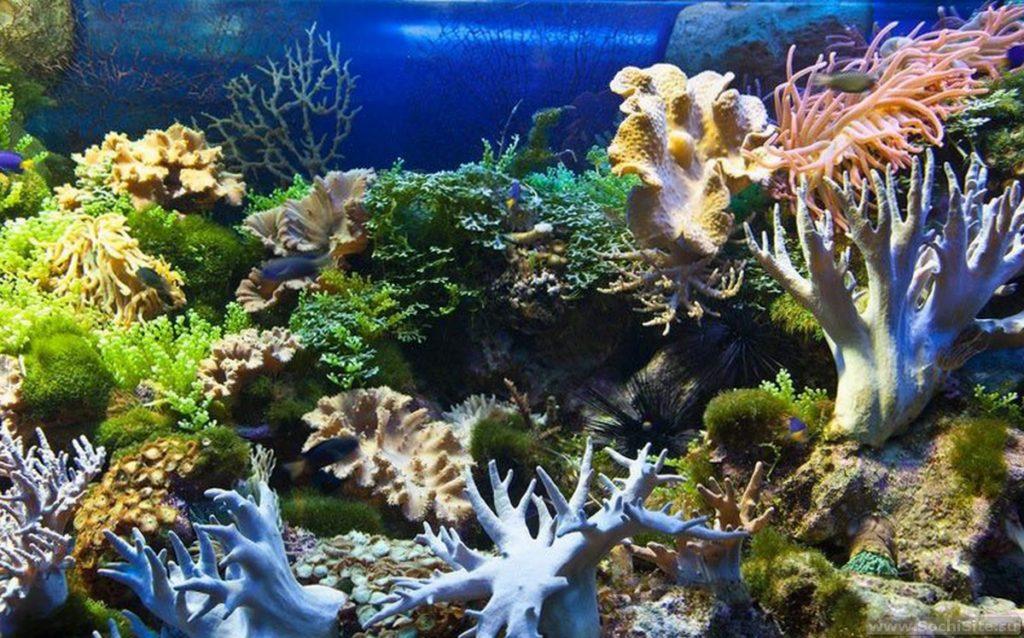 Океанариум Сочи