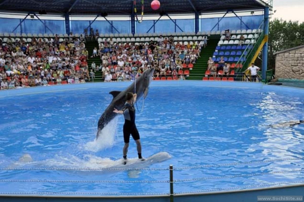 Дельфинарий в Адлере (Курортный городок) - фото, отзывы