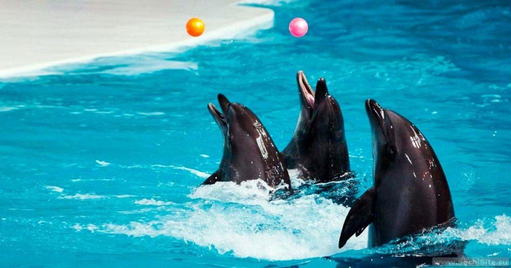 Дельфинарий в Адлере (Сочи)