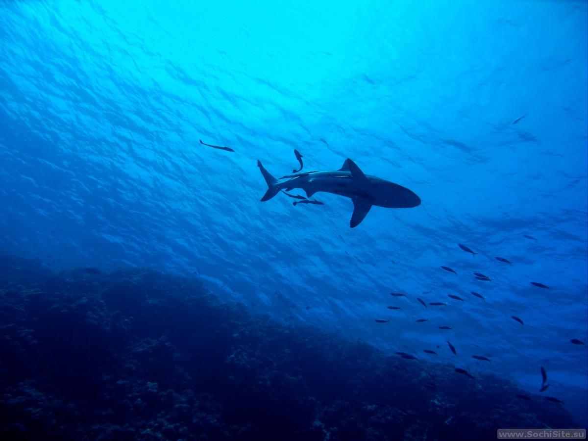 Есть ли акулы в Сочи?