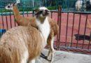 Зоопарк в Сочи
