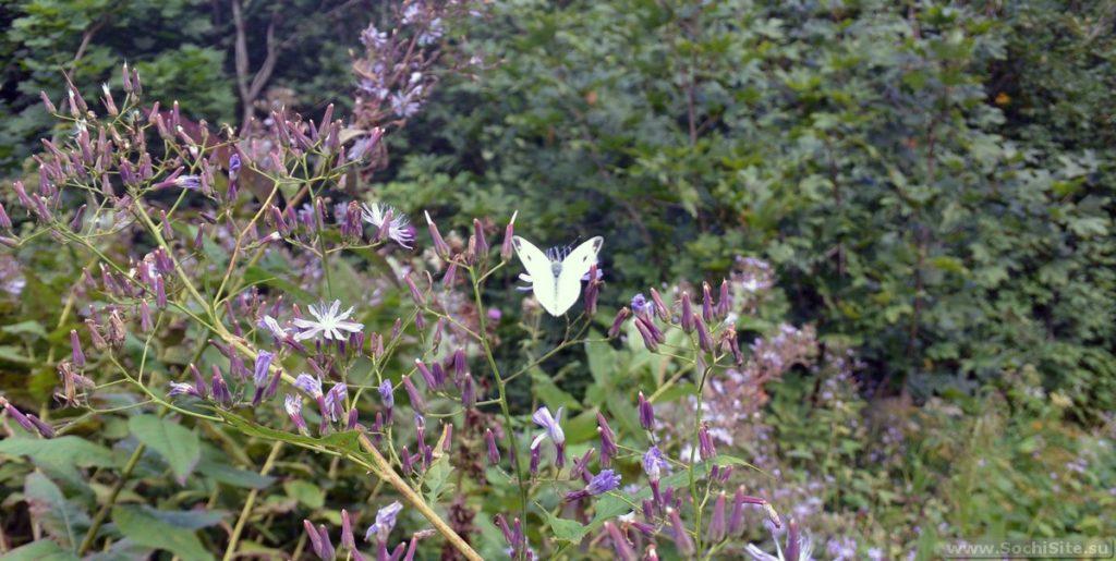 Бабочка в горах